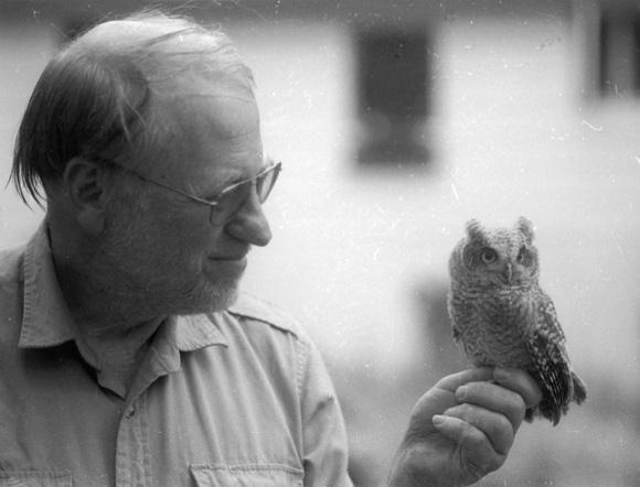 Screech Owl Mount Hope Cemetery