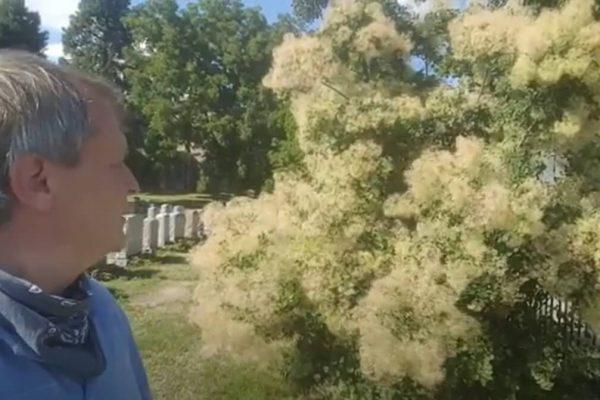 the smoke tree three part tree tour