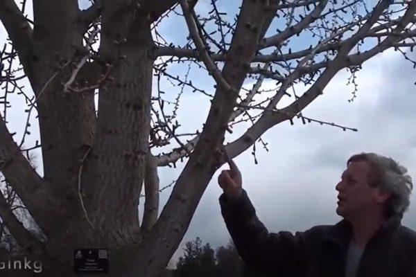 tree tour part 2 three part tree tour