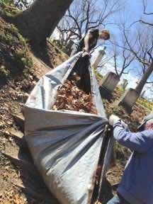 Dragging leaf tarp up the kettle bank