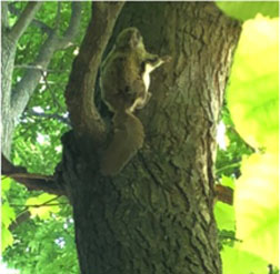 flying squirrel on tree trunk