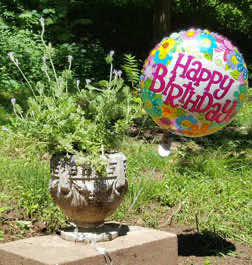 planted urn and birthday balloon at Colman gravesite