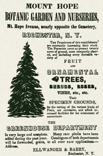 Ellwanger tree ad